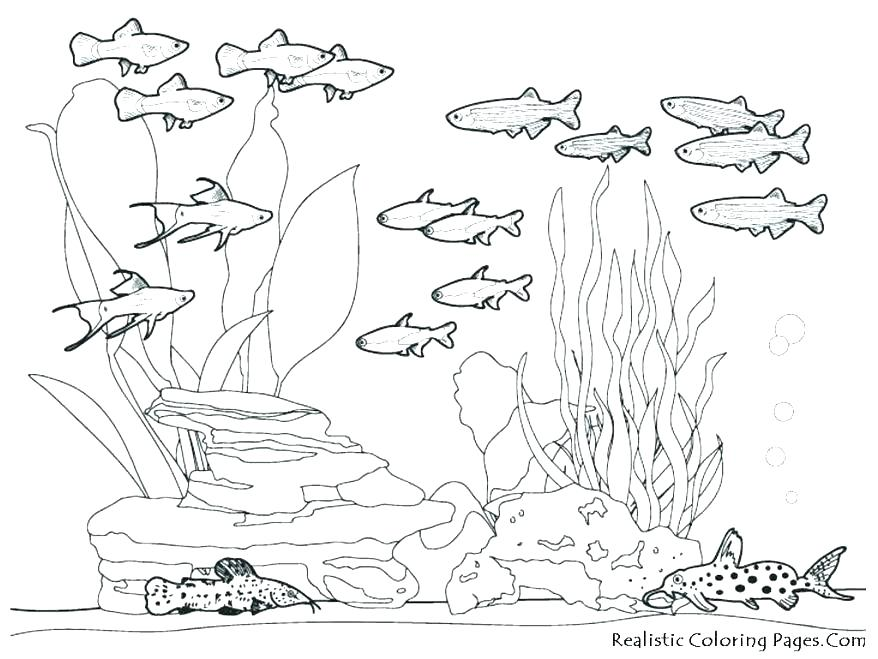 878x659 Sea Creatures Coloring Pages Underwater Coloring Page Underwater