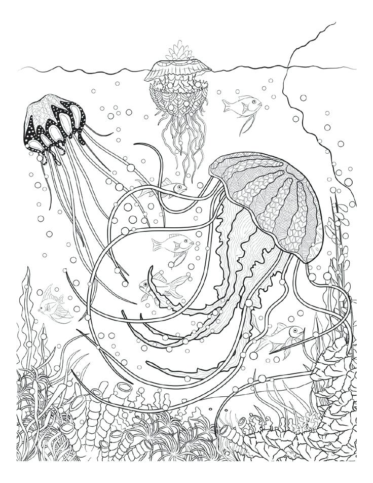 736x952 Underwater Coloring Pages Underwater Coloring Pages Sea Life Page