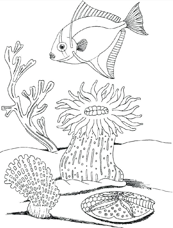 695x917 Underwater Coloring Pictures Trend Underwater Coloring Pages