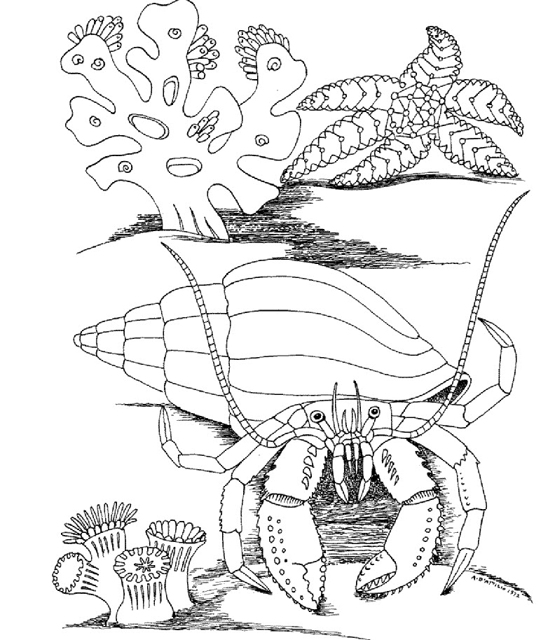 792x914 Kids Under Underwater World Coloring Pages
