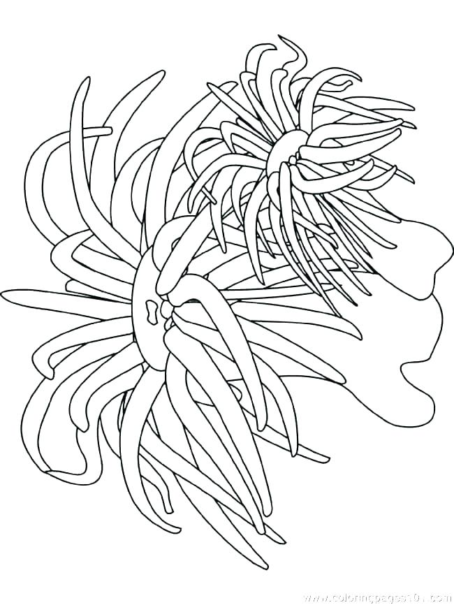 650x866 Ocean Scene Coloring Pages