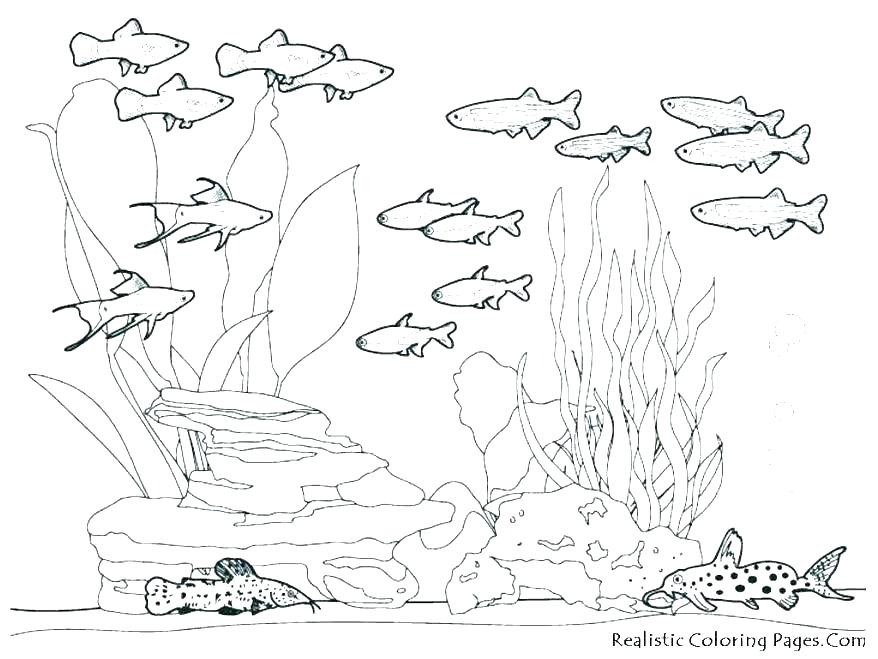 878x659 Underwater Sea Creatures Coloring Pages