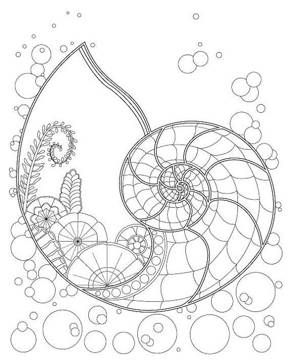 570x713 Fantasy Nautilus Shell Underwater Plant Coloring Page For Adults