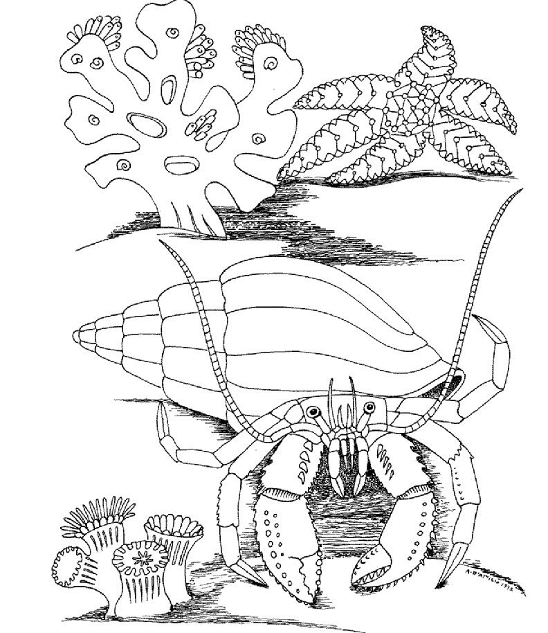 792x914 Kids Under Underwater World Coloring Pages Kids Coloring