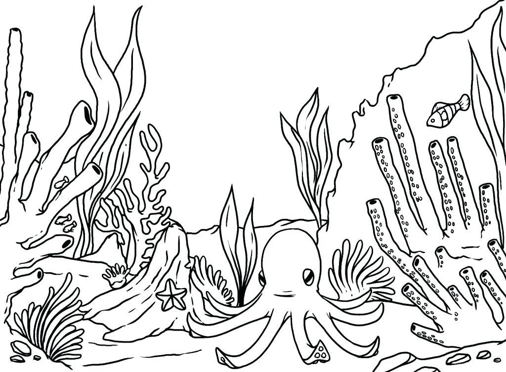 1024x753 Ocean Habitat Coloring Pages Ocean Coloring Page Underwater