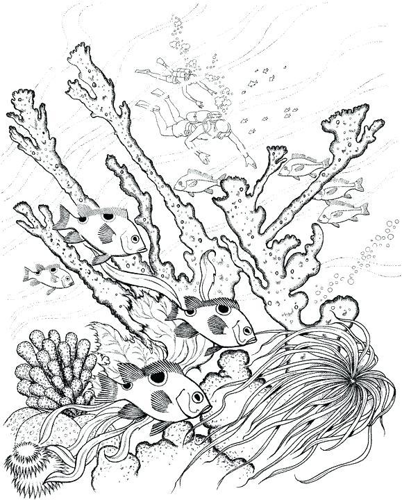 579x720 Ocean Scene Coloring Page Adult Ocean Coloring Pages Underwater