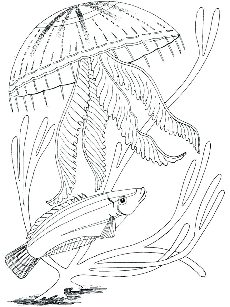 736x981 Ocean Scene Coloring Page Free Animals Underwater Pages