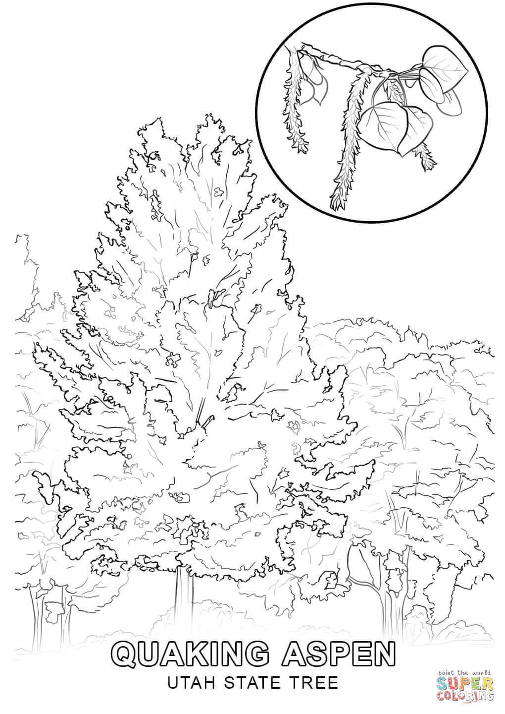 1020x1440 The Best Utah State Tree Coloring Page Printable Pics Of Flower