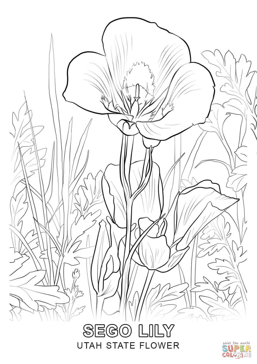 1020x1440 Utah State Flower Coloring Page Free Printable Coloring Pages