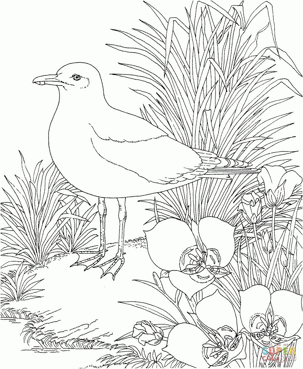 1025x1247 Fascinating California State Flower Coloring Page Gull And Sego