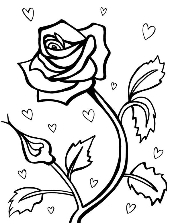 600x776 Rose For Valentine Day Coloring Page