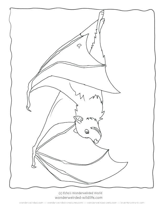612x792 Bat Coloring Also Vampire Bat Coloring Page Rouge The Bat Coloring
