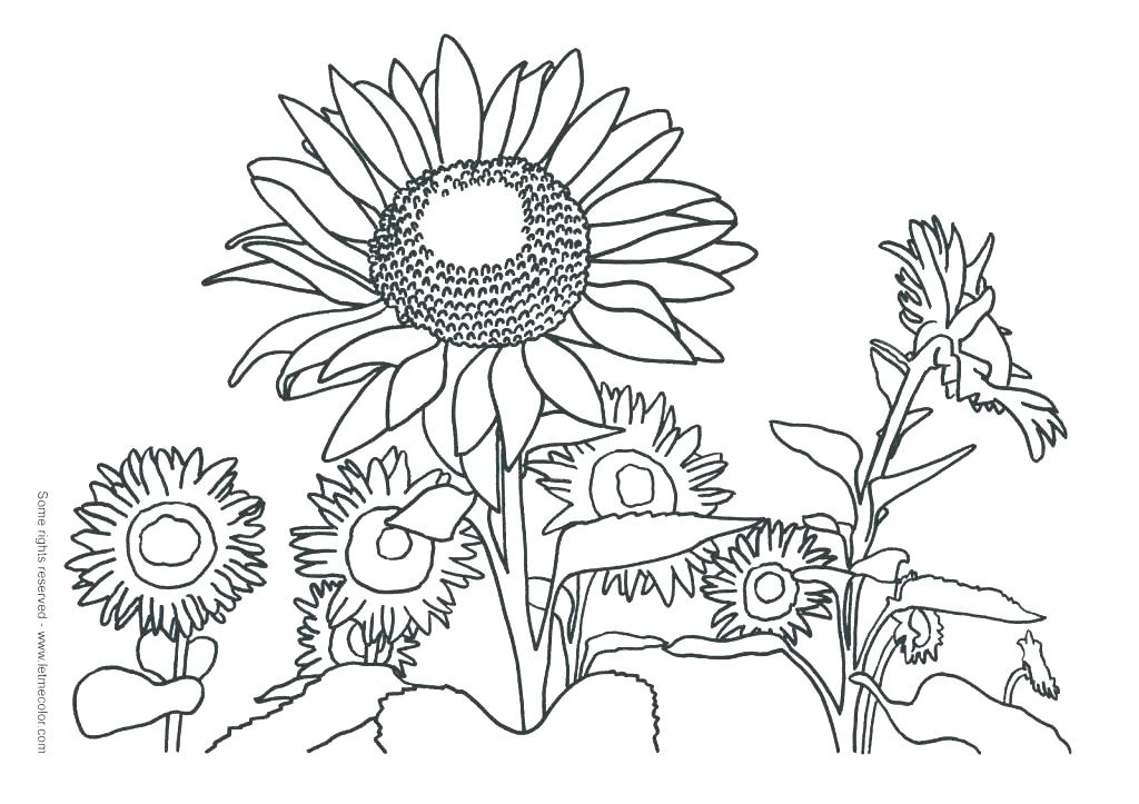 1024x723 Van Gogh Sunflower Colouring Pages Kids Coloring Van Coloring