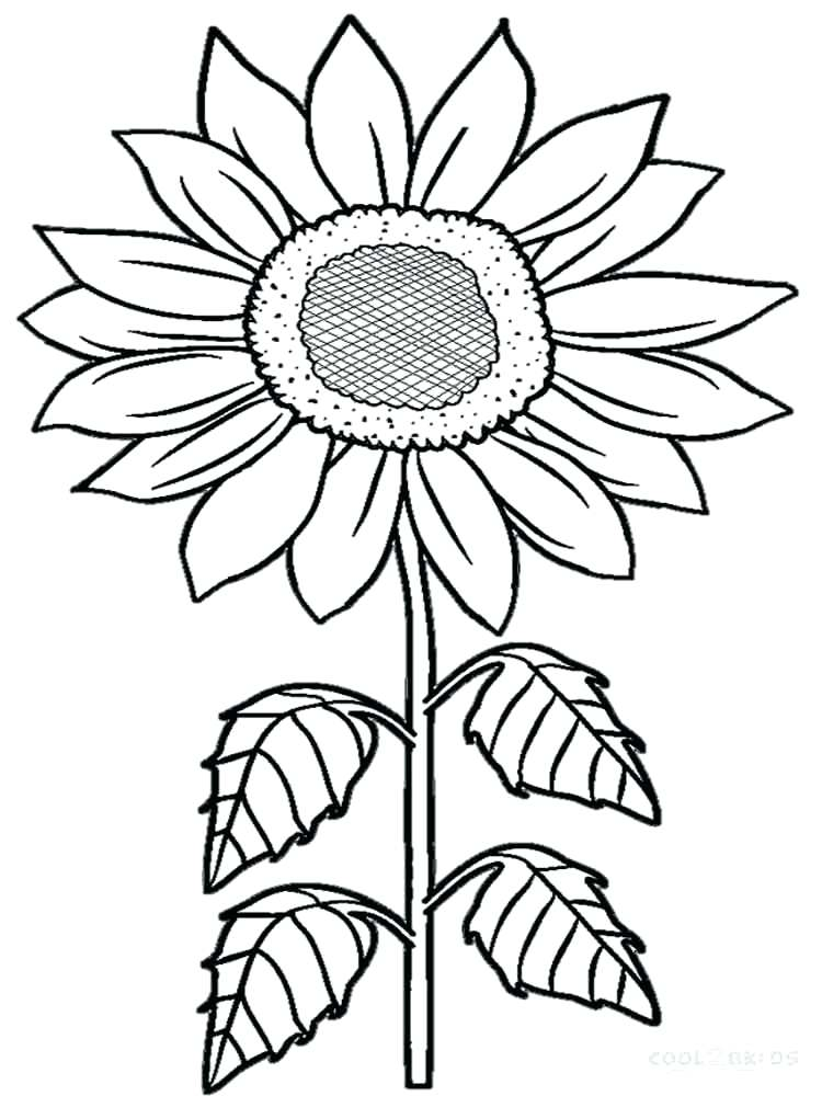 750x1000 Sunflowers Coloring Pages Sunflowers Coloring Pages Flowers Plants