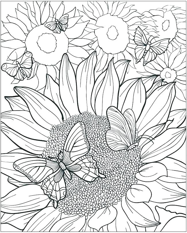 650x809 Van Gogh Sunflowers Coloring Page Sunflowers Coloring Pages Van