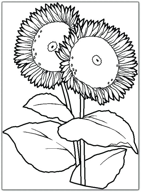 543x739 Van Gogh Sunflowers Coloring Page