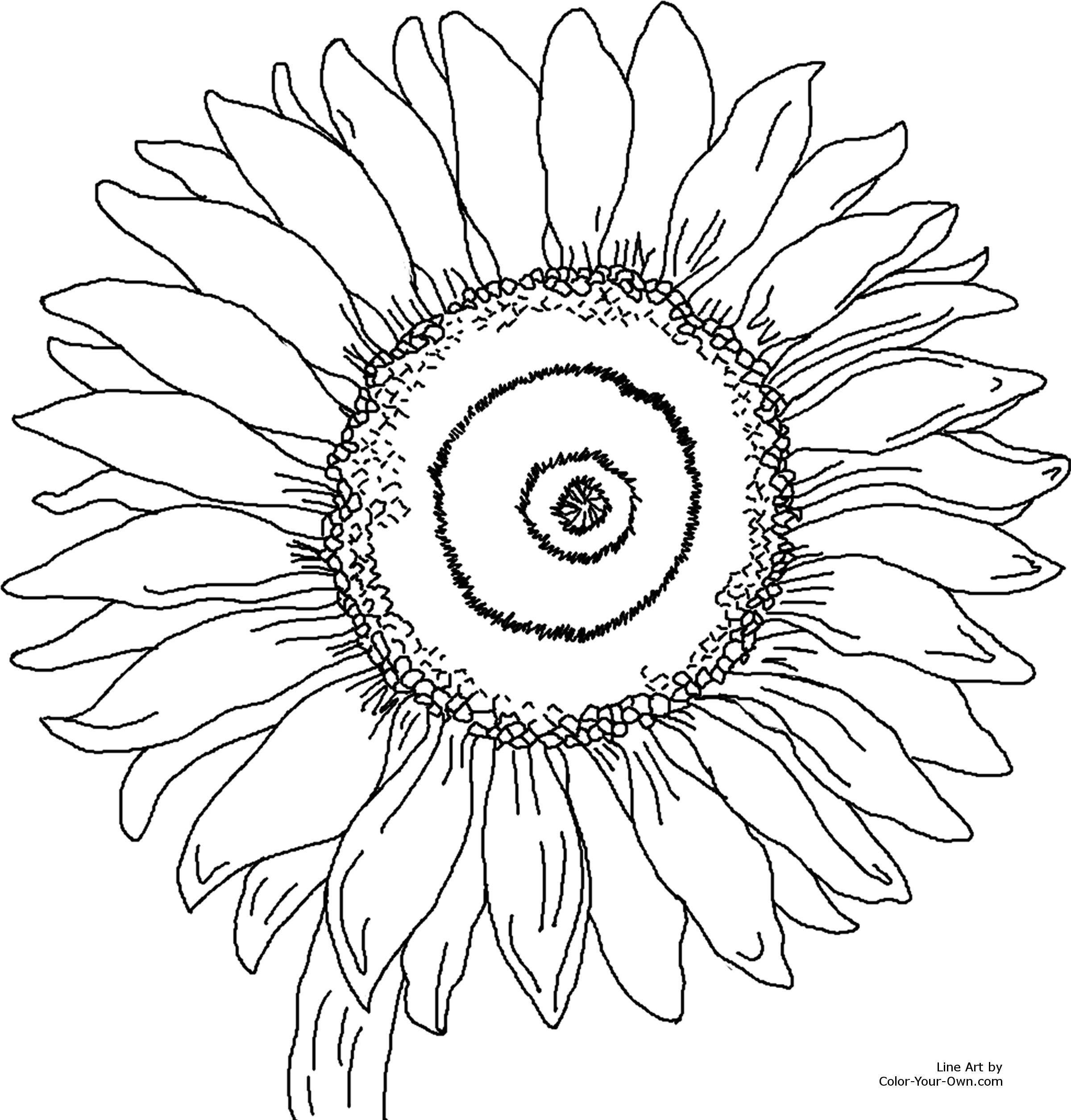 2400x2511 Sunflower Coloring Page