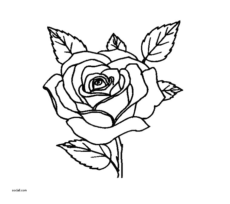 760x676 Fresh Flowers In Vase Coloring Pages