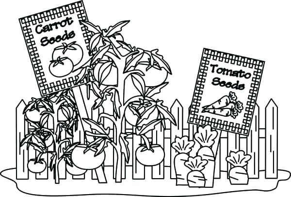 600x407 Vegetable Garden Coloring Page Garden Coloring Pages Tropical