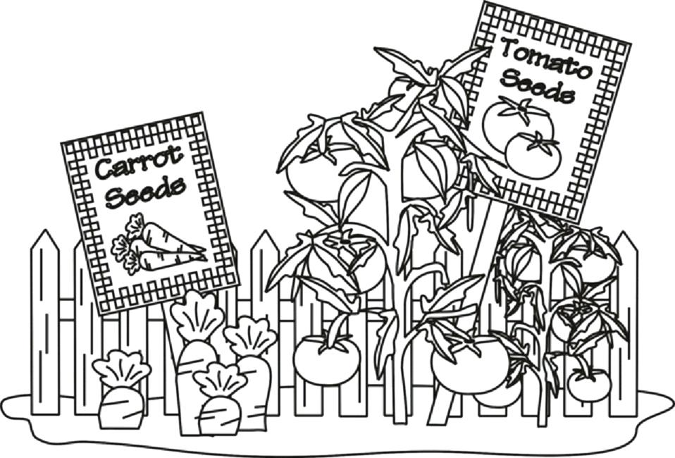 Vegetable Garden Coloring Pages At Getdrawings Free Download