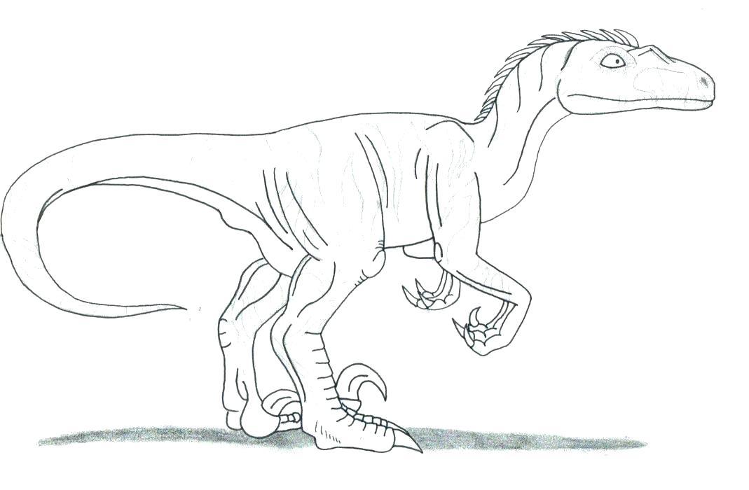 1069x700 Velociraptor Coloring Page