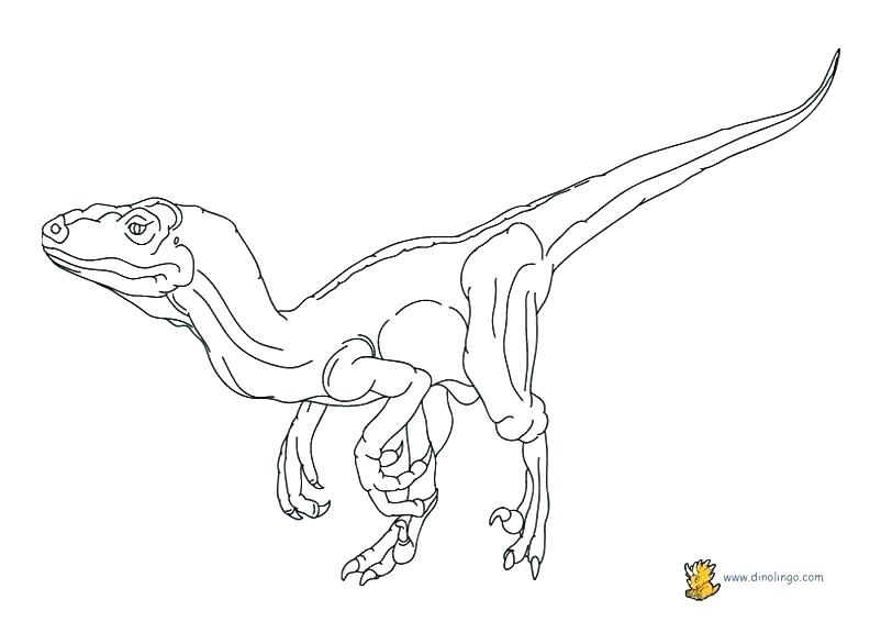 Velociraptor Printable Coloring Pages At Getdrawings Com Free For