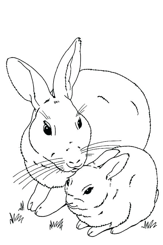 567x850 Rabbit Coloring Pages Colorful Rabbit Coloring Page Velveteen