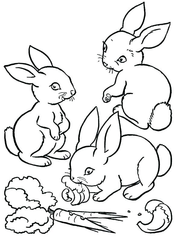 600x800 Velveteen Rabbit Pictures Color Kids Coloring Pictures Of Bunnies