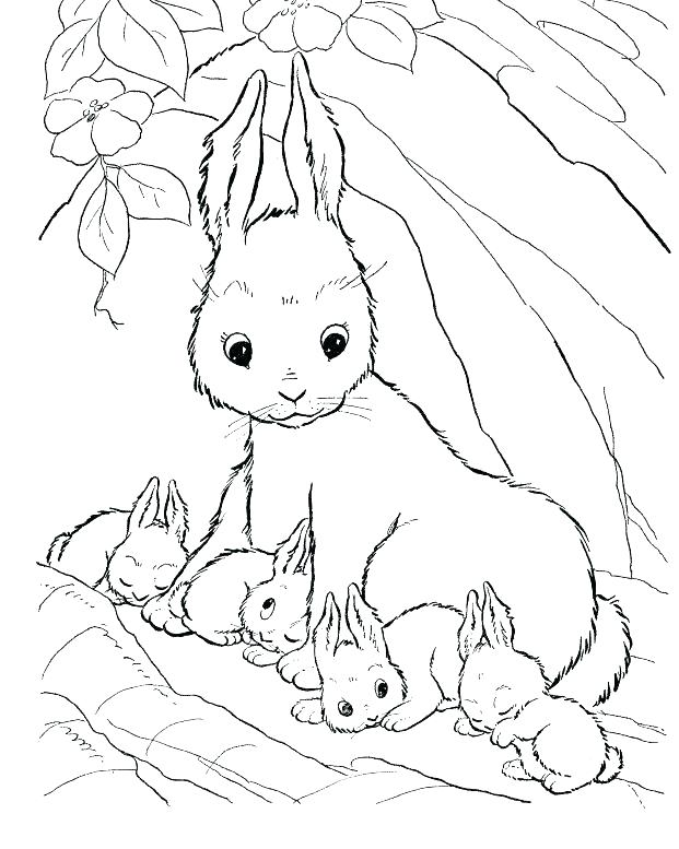 621x777 Coloring Pages Rabbit Coloring Pages Of Rabbits Rabbit Face
