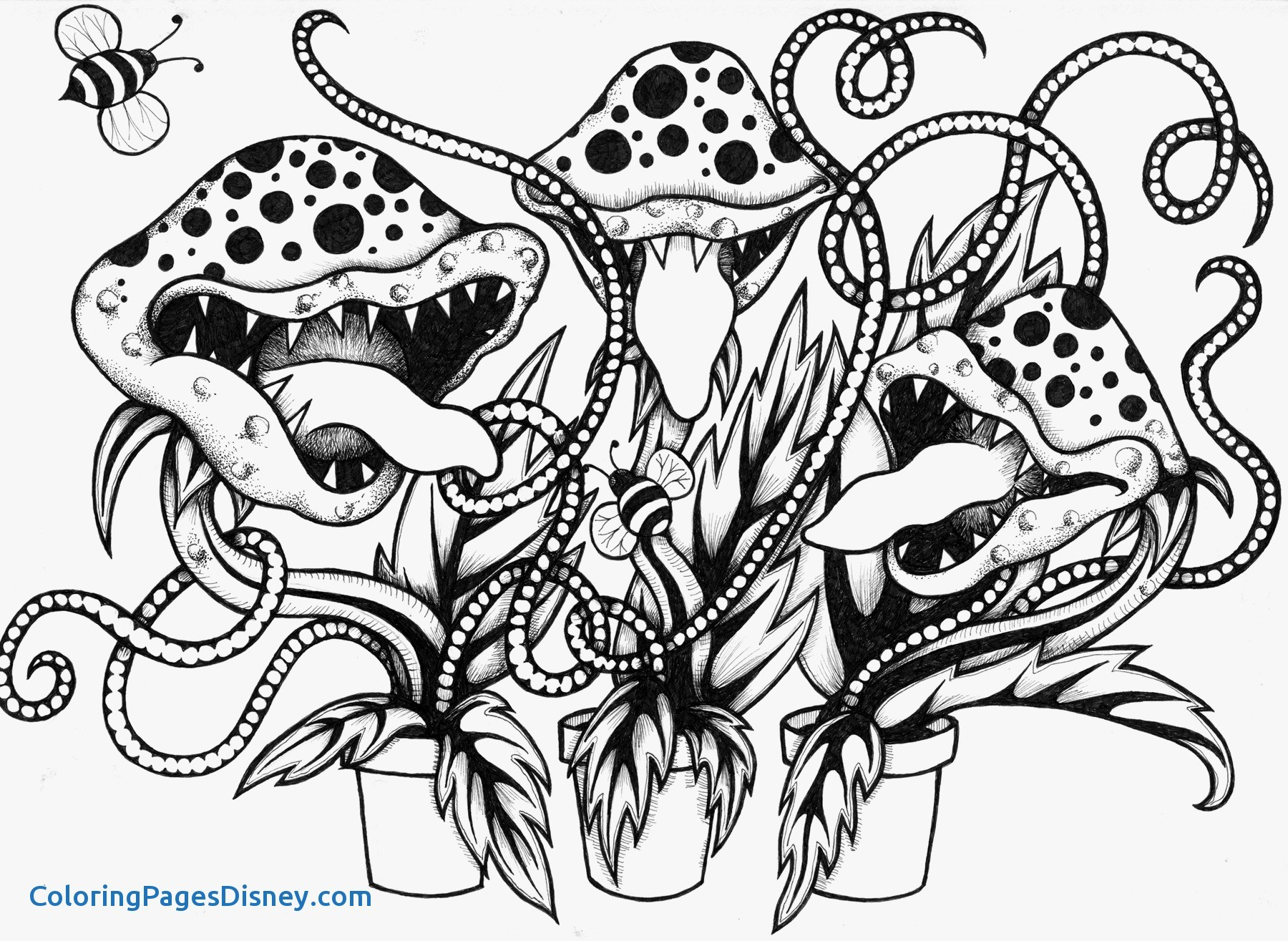 1800x1315 Venus Fly Trap Coloring Pages New Venus Fly Trap Coloring Page