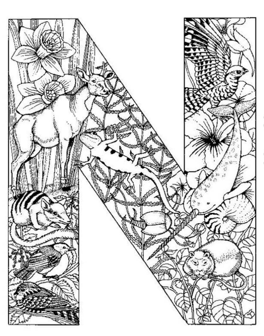 900x1145 Very Detailed Coloring Pages