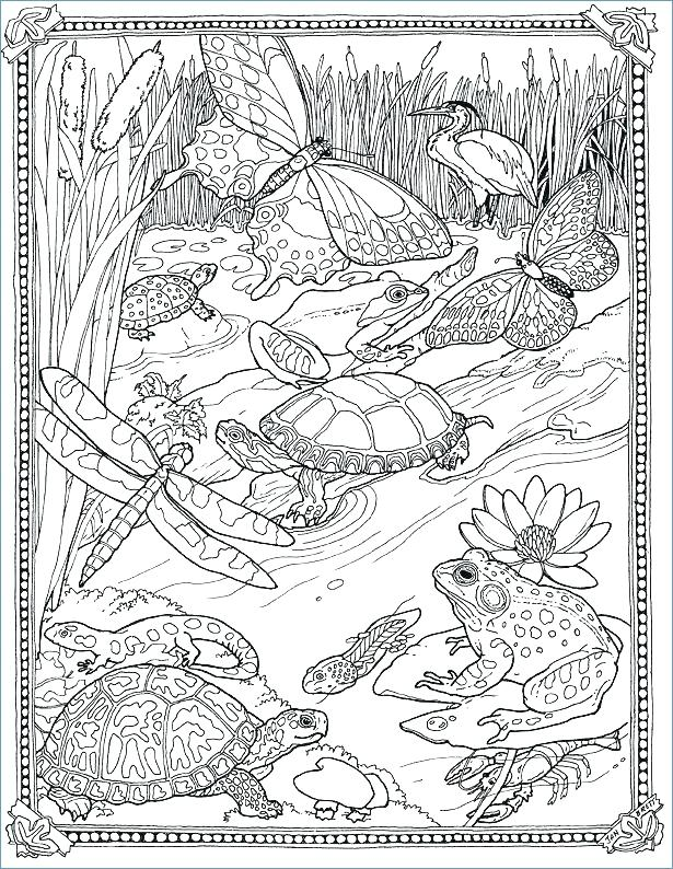 615x794 Detailed Coloring Pages