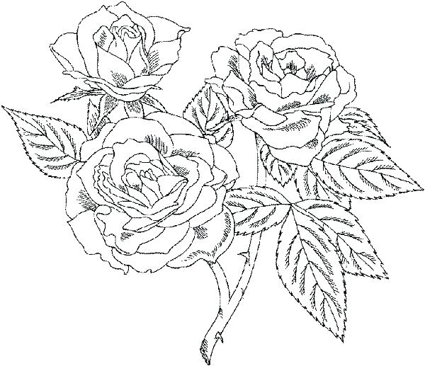 600x517 Very Detailed Coloring Pages