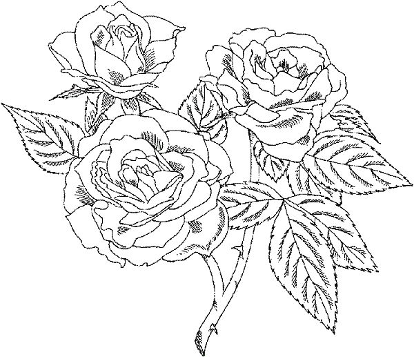 Very Detailed Coloring Pages Printable