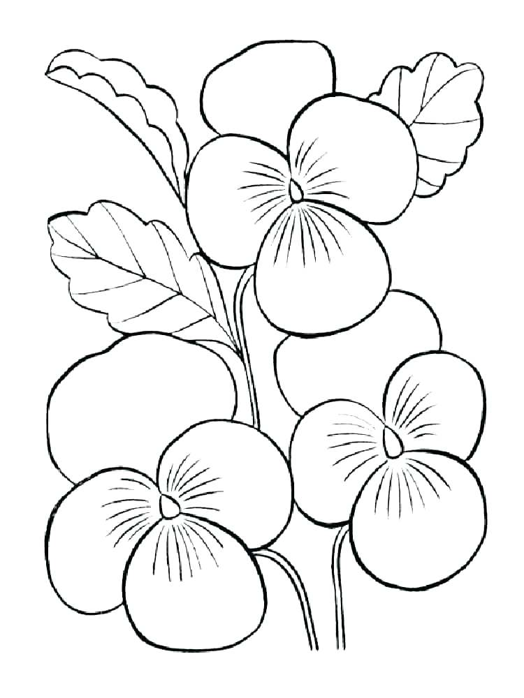 750x1000 Hibiscus Coloring Page Hibiscus Flower Coloring Pages Violet