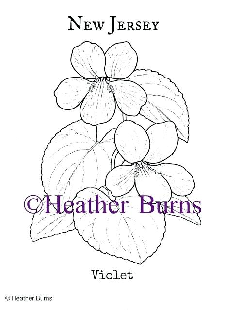 464x640 Violet Flower Coloring Page New Jersey State Flower Violet Purple