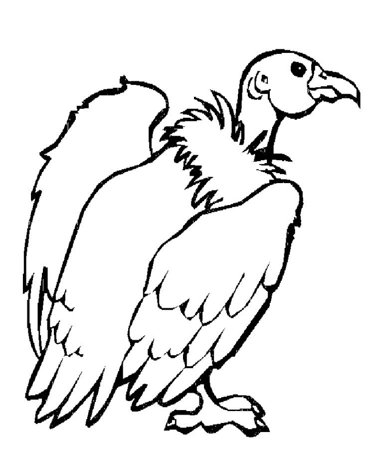 Vulture Coloring Page