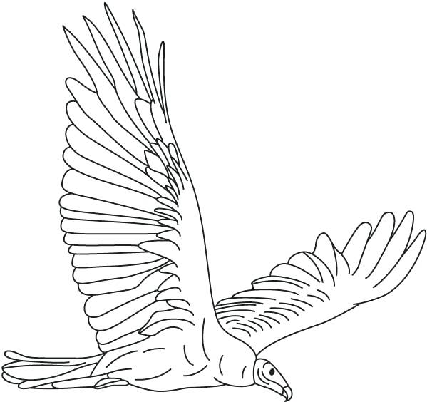 599x564 New Vulture Coloring Pages Vultures Free Vulture Magic Vulture