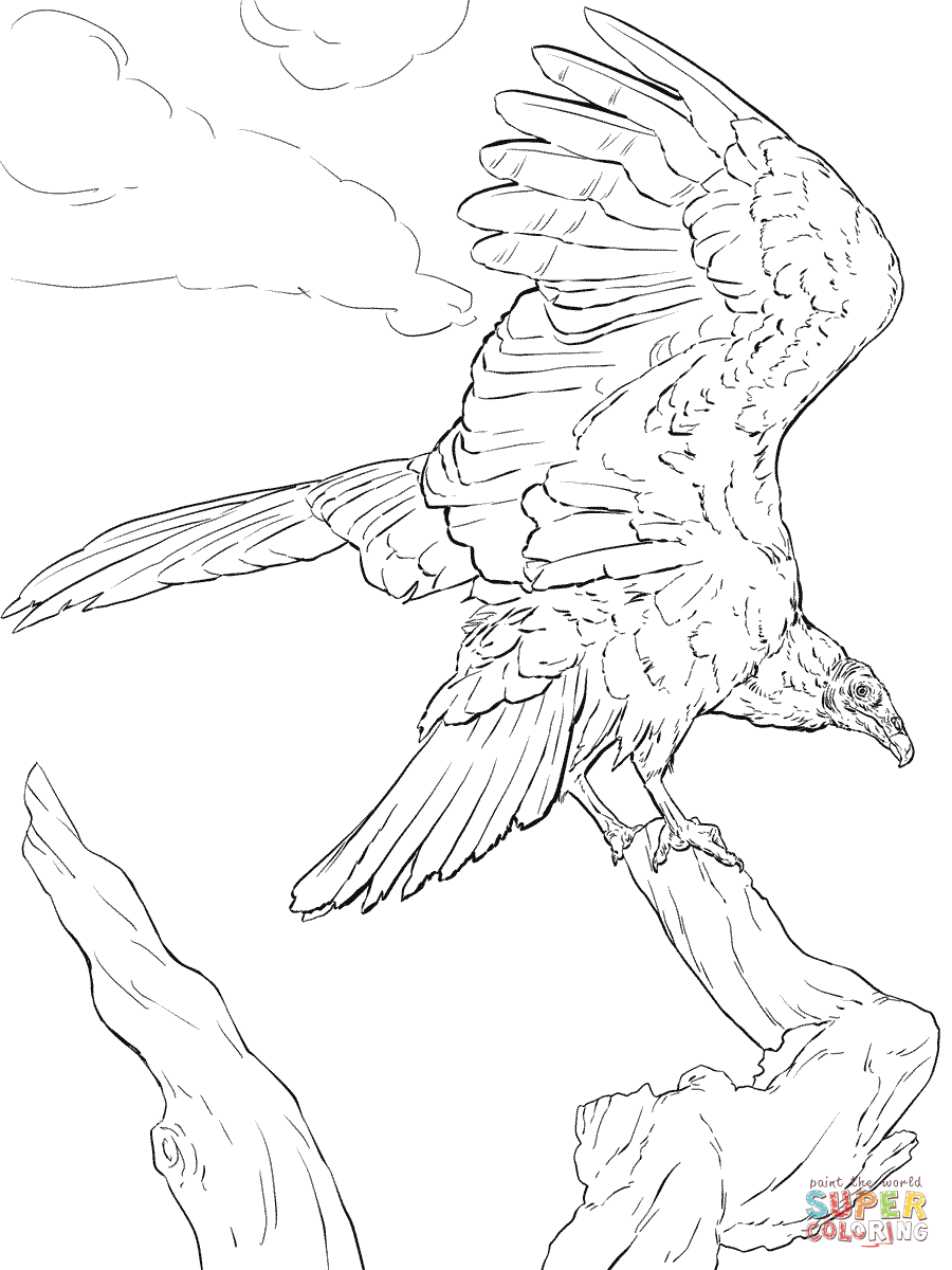 900x1200 Realistic Turkey Vulture Coloring Page Free Printable Pages