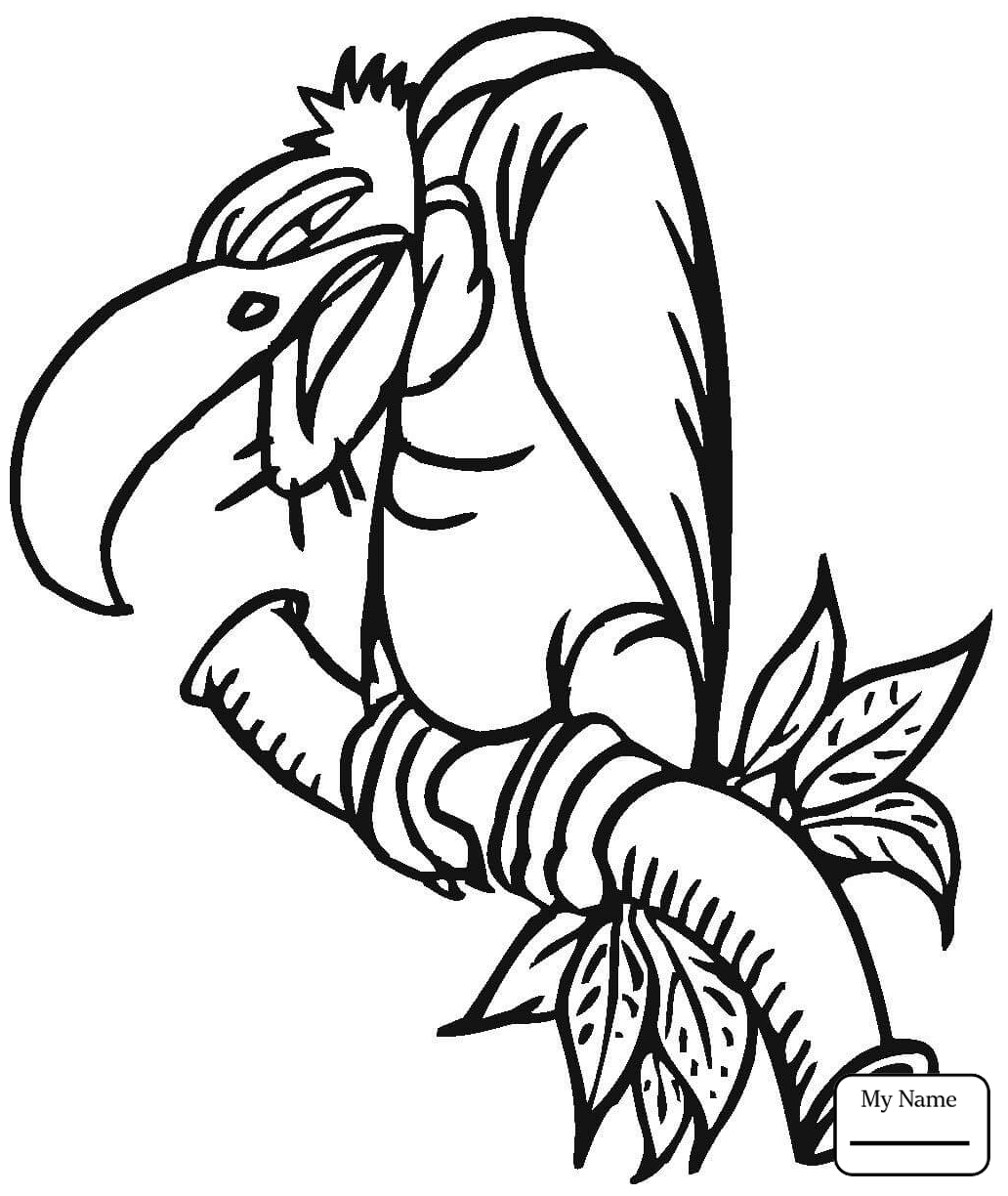 1032x1224 Vulture Birds Vultures Coloring Pages For Kids Free Page To Print