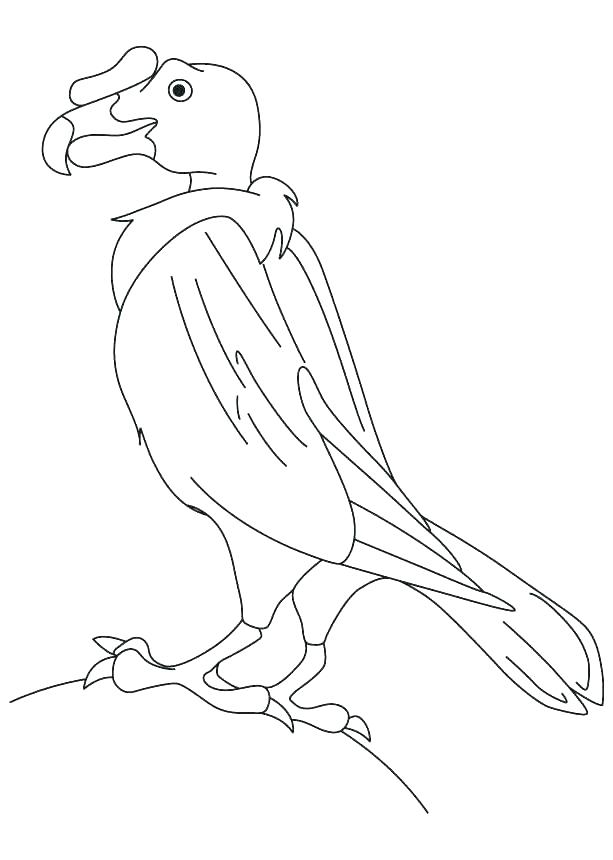 613x860 Vulture Coloring Page Vulture Coloring Page Turkey Vulture