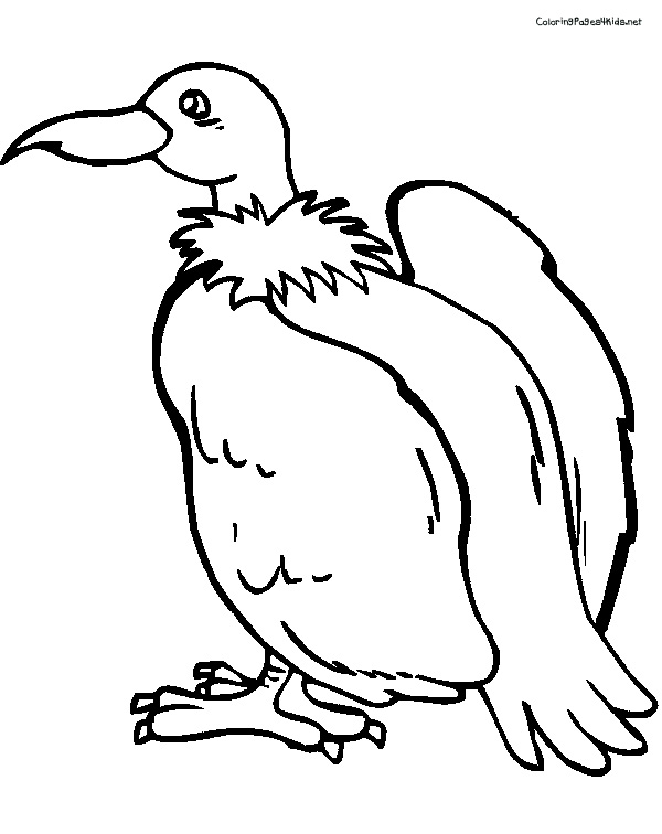 600x756 Vulture Coloring Pages