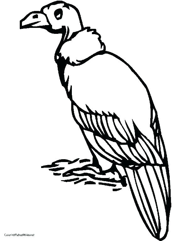 612x769 Vulture Coloring Pages Best Vulture Coloring Pages Of Pin Black
