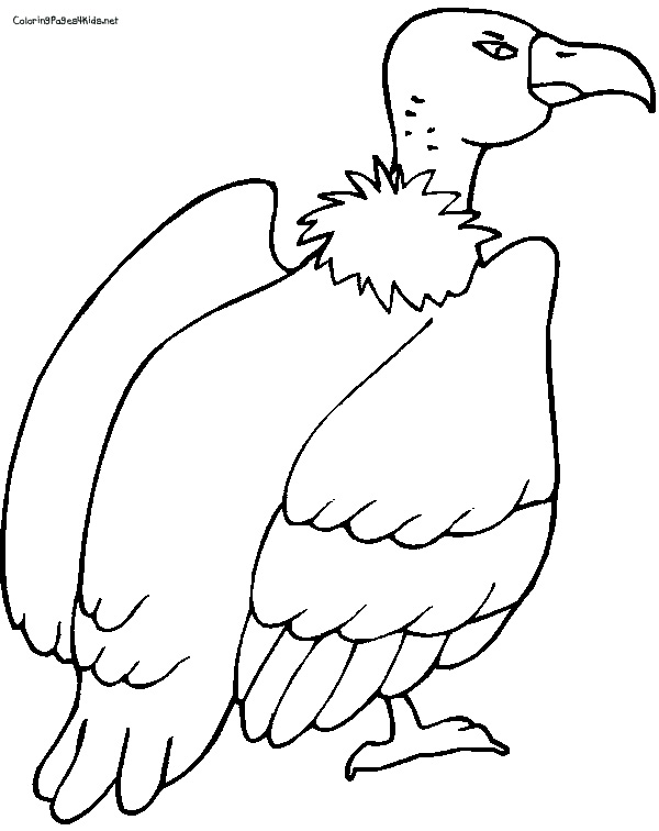 600x756 Vulture Coloring Pages For Kids