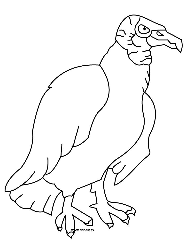 768x1024 Coloring Vulture