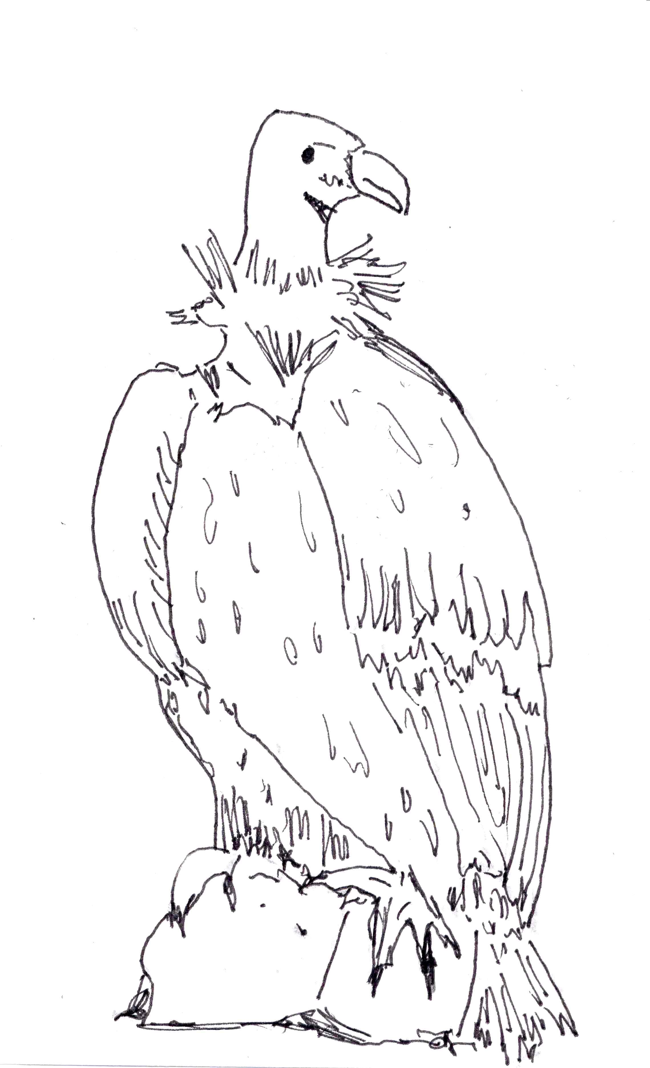 2278x3739 Wonderful Vulture Coloring Pages Page Tgm Spor
