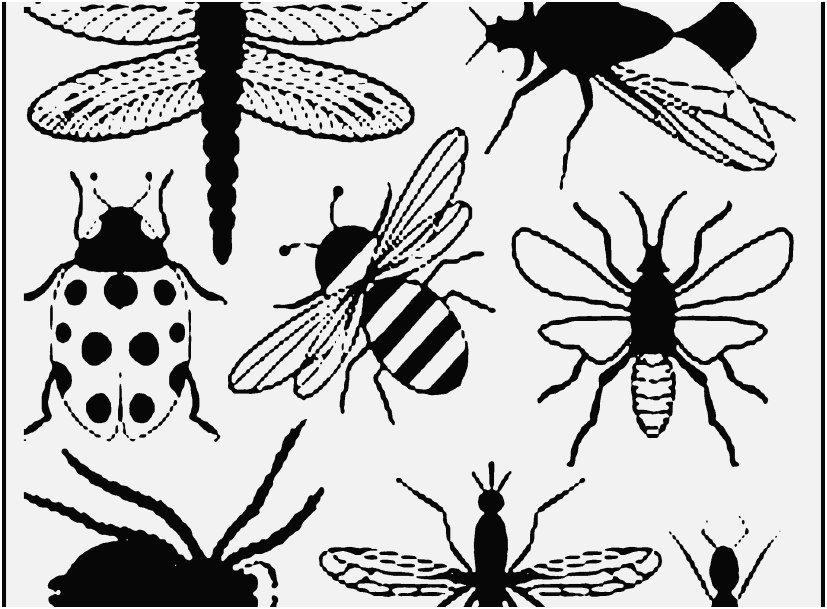 827x609 Printable Coloring Pages Vw Bug Display Bug Coloring Pages Free