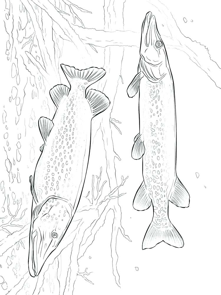 750x1000 Salmon Coloring Pages Salmon Template Salmon Coloring Pages