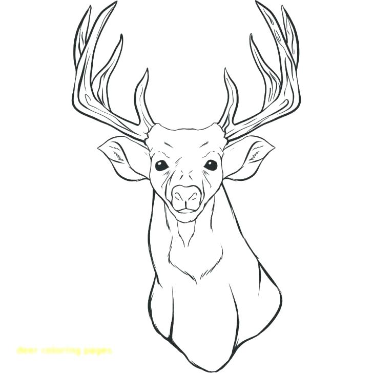728x728 Deer Head Coloring Pages Deer Coloring Page With Wallpaper Deer