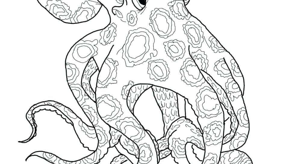 960x544 Squid Coloring Page